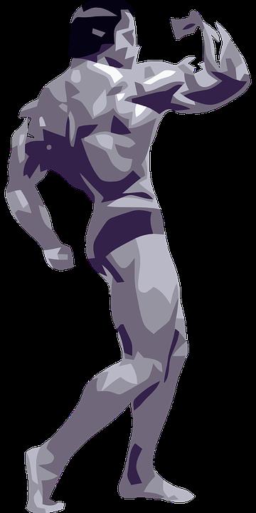 Arnolds Theorie zu Proteine zum Muskelaufbau